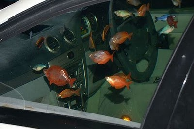 [تصویر: car_aquarium_04.jpg]