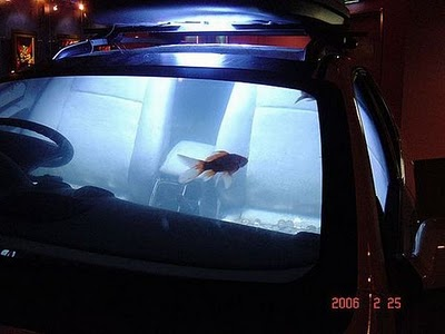 [تصویر: car_aquarium_08.jpg]